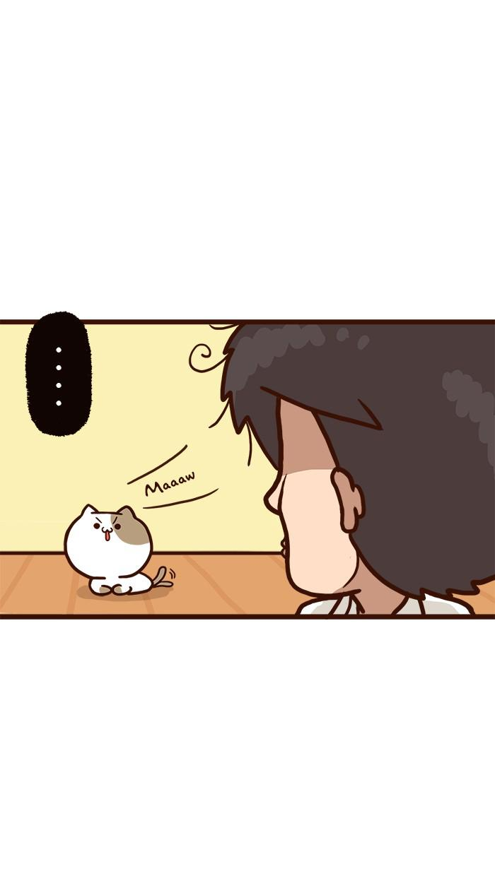 The Salary Man & Tofu the Funny Cat Ch.9